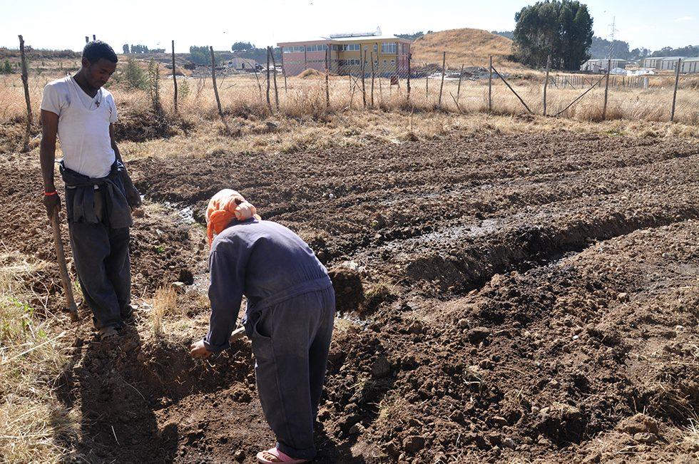 Dez. 2017 - a: ... und der Gemüseacker auf dem Campus konnte bereits für die Neubepflanzung mit Hilfe der Pumpe bewässert werden